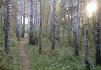 /Files/images/kartinki_2/tb/ls/ліс.JPG