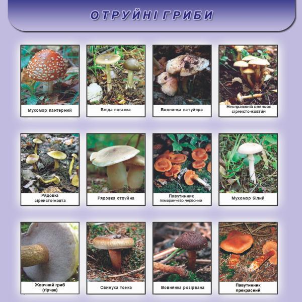/Files/images/meditsina/отруйні гриби.jpg2.jpg