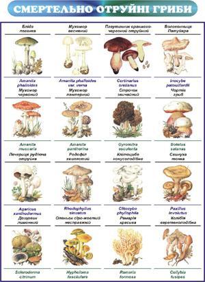 /Files/images/meditsina/отруйні гриби.jpg